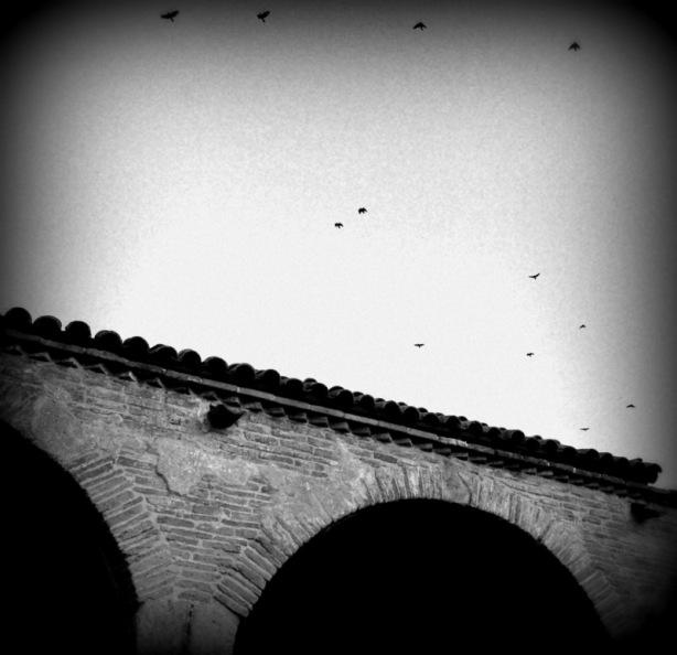 Mission SJC Crows