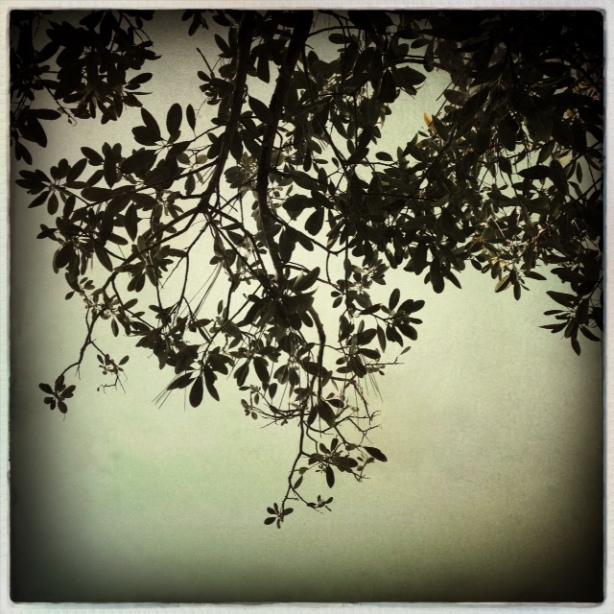 Rancho Los Encinos Arty Tree